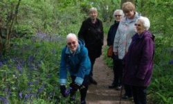 Bluebell-Spotting-Redhill
