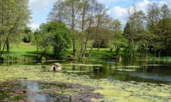Tandridge-Pond